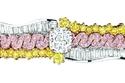 مجوهرات Soie Dior لإطلالة راقية وفخمة!