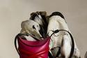 حقيبة The Curve من Alexander McQueen