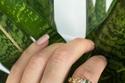 8 قطع من المجوهرات الجريئة
